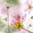 Flower beautiful card background — Stock Photo