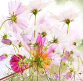 Nature flower summer background — Stock Photo