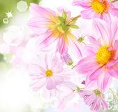 Sfondo di fiori natura bella — Foto Stock