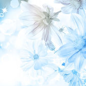 Beautiful flower on a blurred blue light abstract background — Stock Photo