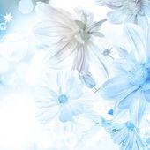 Hermosa flor sobre un fondo abstracto luz azul borroso — Foto de Stock