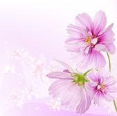 Nature beautiful flower background — Stock Photo