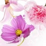 Nature beautiful flower background — Stock Photo #28895491