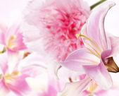 Zahradní lily a další květiny — Stock fotografie