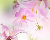 Garden flower — Stock Photo