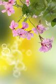 Garden yellow camomile — Stock Photo
