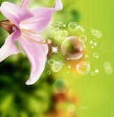 Güzel çiçek kartı — Stok fotoğraf