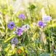 Lavender. Lavender field at Sunset.Soft Focus — Stock Photo
