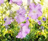 Красивый цветок сада.Лето Природа фон — Стоковое фото