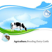 Agriculture.Breeding dairy Cattle.Vector background — Stock Vector