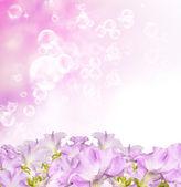 Beautiful flowers spring garden background — Stock Photo