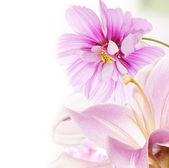 Flowers garden background — Stock Photo