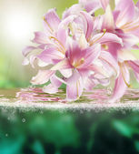 Flower beautiful orchid.Exotic water background — Stock Photo