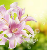 Flower beautiful orchid.Exotic naturer background — Stock Photo