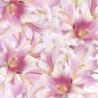 Beautiful flower card.Pink Lily — Stock Photo