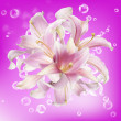 Beautiful flower card. Pink Lily — Stok fotoğraf