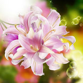 Exotic flower card.Orchid — Stock Photo