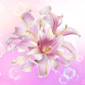 Pink Lily.Flower holiday card — Stock Photo