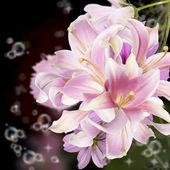 Krásné květiny exotické lily.floral karta — Stock fotografie