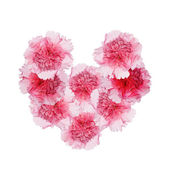 The beautiful flowers heart of the petals rose on a white background — Stock Photo