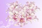 The beautiful abstract flowers Heart of the petals exotic pink lily.Love concept — Stock Photo