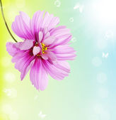 Beautiful flower.Floral card — Stockfoto