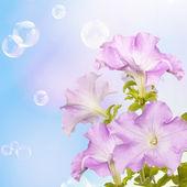 Flower beautiful card — Stock Photo