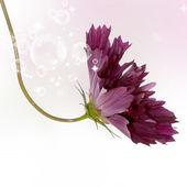花卉美丽卡 — 图库照片