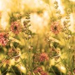Wild flowers field at Sunset. Soft Focus  — Stock Photo