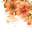 Beautiful flower card.Water flora — Stock Photo #36482841