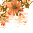 Beautiful flower card.Water flora — Stock Photo #36482843