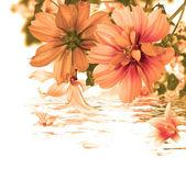Beautiful flower card.Water flora — Φωτογραφία Αρχείου