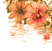Beautiful flower card.Water flora — Stock Photo