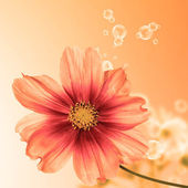 Beautiful flower card.Exotic flora — Stock Photo