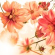 Beautiful flower card.Exotic flora — Stockfoto