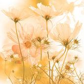 Flora card.exotic bel fiore — Foto Stock