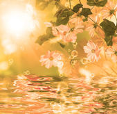 Exotic water flower.Blossom flora — Stock Photo