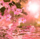 Exotic water flower.Blossom flora — Stockfoto