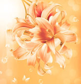 Beautiful flower card.Blossom Exotic Lily — Foto de Stock