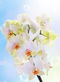 Egzotyczny kwiat orchid.beauty kwiat background.spa — Zdjęcie stockowe
