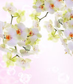 Exotic Japanese flower orchid.Beauty background.Spa concept — Stock Photo