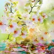 Stock Photo: Beautiful water flowers Japanese Orchid.Beauty.Flora