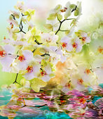 Beautiful water flowers Japanese Orchid.Beauty.Flora — Stok fotoğraf