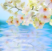 Flowers water Japanese Orchid.Flora card — Stock Photo