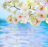 Flowers water Japanese Orchid.Flora card — Foto de Stock