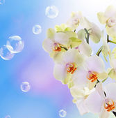 Beautiful Flower Orchid on abstract blue background with flying soap bubbles — Stock Photo