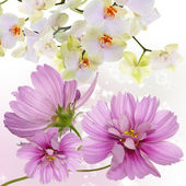 Blooming flowers Orchid.Japanese Nature.Background — Stock Photo