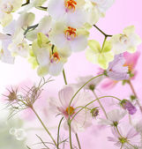 Beauty Blooming Flowers Japanese Orchid.Flora background — Stock Photo