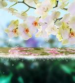 Tarjeta de belleza floración agua orchid.floral japonés — Foto de Stock