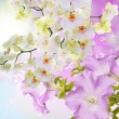 Beautiful Floral Card.Spring Bloom Flowers — Stock Photo #40325149